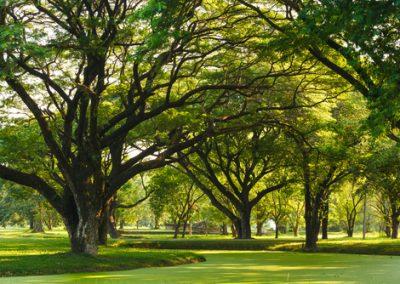 Six arbres fruitiers auto-fertiles