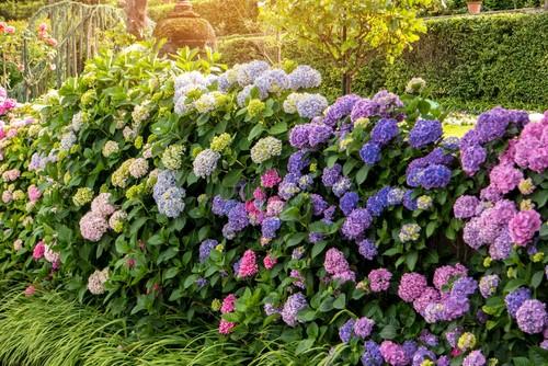 Arbustes à fleurs - Le jardin de plaisance