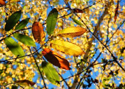 L'automne se prépare