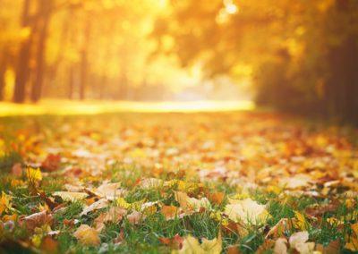 On peut diviser l'automne en 3 périodes