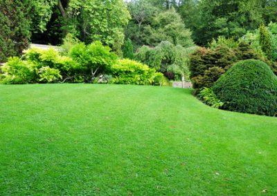 Quatre secrets pour une belle pelouse