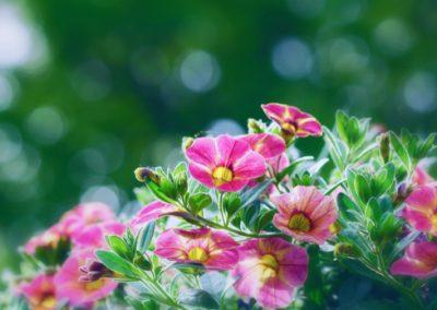 Ah ! Les potées fleuries