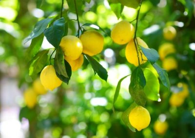 Comment avoir un beau citronnier