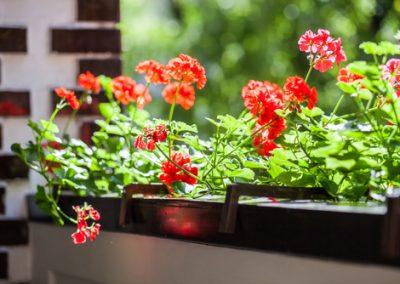 Sortie de plantes