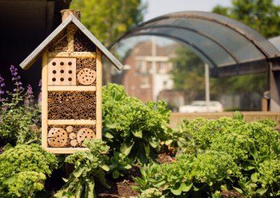 5 secrets pour donner asile aux bons insectes