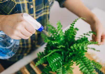Comment garder l'humidité des plantes ?