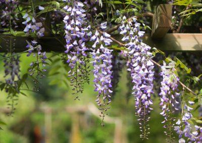 Aménager une pergola fleurie