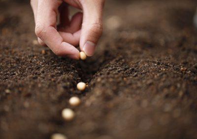 Légumes primeurs, semez tôt…