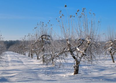 Les traitements de fin d'hiver