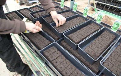 Semis plants de potager