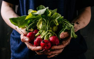 5 secrets pour réussir les radis
